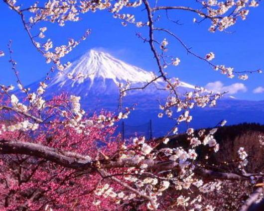 Sakura Blossom Forecast